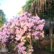 今朝の曼陀羅寺