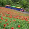 昭和記念公園(2018.05.08)