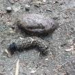 洗練されたデザインの芋虫
