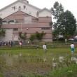 永井酒造友の会~田植えから稲刈り・純米酒到着までの記録in2009~