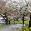 2018 春の京都