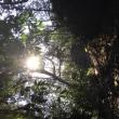 もののけの谷 ◆ 木霊