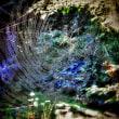 Garden in web.