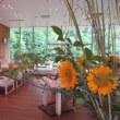 7月29日 夏休み特別企画 小野園「親子日本茶教室 in とらや」