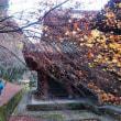 九州自然協議会