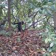 秋の猫 三態 その二