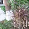植物の霜対策