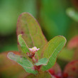 170908_箱根-6 <湿性科花園の 植物-3>