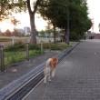 夕暮れ散歩 180625