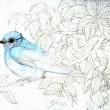 途中経過2 (エゴノキと青い鳥)