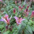 寒露(10月8日)に咲く花
