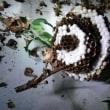 【蜂の巣駆除】アシナガバチに刺されて病院へ。「ハチ取り名人110番」蜂の巣駆除の様子。