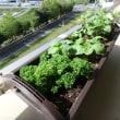ハーブと夏野菜