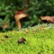 輪王寺の庭