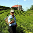 ドイツはトルコの茶葉の最大輸入国