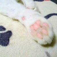 11月8日(木)のつぶやき 白猫ミルコ 肉球 肉球効果 【メモ】2万フォロワーの大台に再復活 @mirko_cat