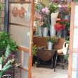 また新しい店ができていた、中山路南側➁ 中華街では珍しいフラワーショップ。「LADY Day」