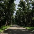 第167回古都旅歩き 京都府立植物園