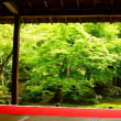 金福寺と圓光寺 ・・・ 京都