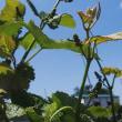 菜園の野菜や果物たち