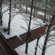 札幌まちなか探検隊  今日の景色 芸術の冬!?