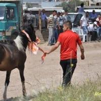 RAHVAN AT YARISI(側対歩競馬)