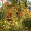浅越ゴエさんのコーナーの愛の木(ほんとはクスノキ)元気でした。