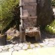 二ホンミツバチ2群同時分蜂を見学