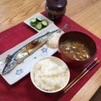秋刀魚、さんま、サンマ。