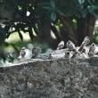 お城の鳥たち!