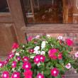 3連休のご案内&店の花です。