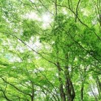 裏磐梯の「新緑」