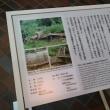 No.1247 ■靖国神社と遊就館に初めて行って来ました