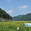 姫新線が走って来た。 (佐用町宝蔵寺) 2018.07.15