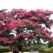 珍しい花・木