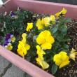 花が咲きました!!