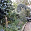 生垣、庭の手入れ