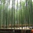 閑話休題67 飛蓬-漢詩を詠む 10 -秋の京都嵐山