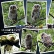 秋ヶ瀬公園でツミとフクロウの雛(第2弾)に出会った
