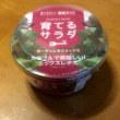 ガーデンレタスミックスの栽培キットを購入しました。