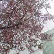 札幌まちなか探検隊    昨日の景色 (4/22)