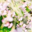春がやってきました! 結婚前撮りロケーションフォトの季節がやってきました!
