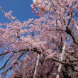 春の巡番報恩講 その4