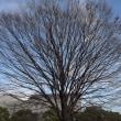 冬の木々たち