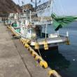 北海道 積丹 幌武意漁港 第38浜丸  最近の釣果写真