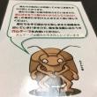 山の上ホテル 〜カメムシとの仁義なき戦い 死闘編〜
