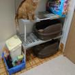 猫トイレ〜2階建てにしよう〜その2