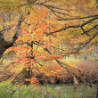 十月、黄葉湿原