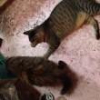 猫たちの微妙な関係