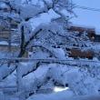 連日の大雪